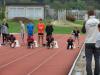 Regijsko ekipno pr. v atletiki (Kranj, 21. 9. 2016)